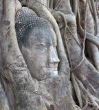 thailand för ayuthayabuddha head mahathat wat Arkivbild