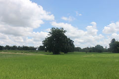Thailand field with blue and green trees. Royalty Free Stock Image