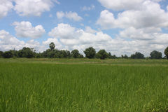 Thailand field with blue and green trees. Stock Photo