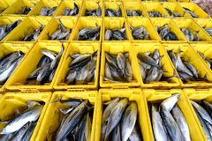 Fish in basket. Thailand fish market many fish in basket for sale Royalty Free Stock Photography