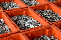 Fish in basket Stock Image