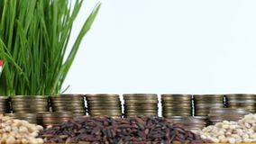 Thailand flag waving with stack of money coins and piles of wheat. And rice seeds stock footage