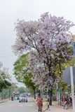 2018-thailand: flor rosada tailandesa Imagen de archivo