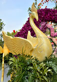Thailand flower festival Royalty Free Stock Images