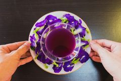 Thailand fresh healthy herbal beverage An-chan juice with lemon juice butterfly pea flower.  royalty free stock images