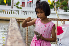 Thailand girl are feeding fish Stock Photography
