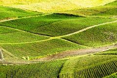 Thailand-Hakenlilie-Plantage Lizenzfreies Stockbild