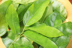 Thailand herbs. Tiliacora triandra  is  herb in Thailand Stock Images