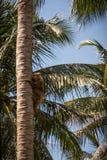 Thailand, het nationale park van Samui stock fotografie