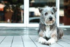 Thailand hund som ser ett hopp arkivbilder