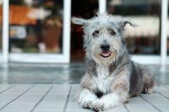 Thailand hund som ser ett hopp royaltyfri foto