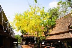 Thailand hus byggde av trä som träden planterade arkivfoto