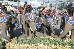 THAILAND ISAN SURIN ELEPHANT FESTIVAL ROUND UP Royalty Free Stock Image