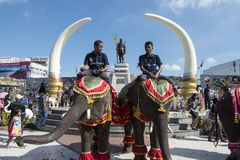 THAILAND ISAN SURIN ELEPHANT FESTIVAL ROUND UP Royalty Free Stock Photos