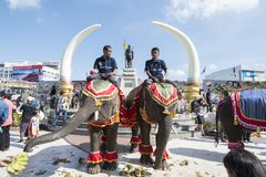 THAILAND ISAN SURIN ELEPHANT FESTIVAL ROUND UP Royalty Free Stock Photography