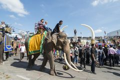 THAILAND ISAN SURIN ELEPHANT FESTIVAL ROUND UP Stock Photography