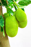 Thailand Jackfruit royalty-vrije stock foto's