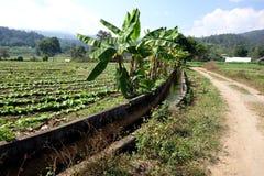 Thailand jordbruk med bevattningkanalen Arkivbild