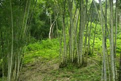 Thailand jungle. Forest of Chiang Mai in northern Thailand Stock Image