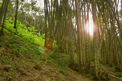 Thailand jungle. Forest of Chiang Mai in northern Thailand Stock Photos