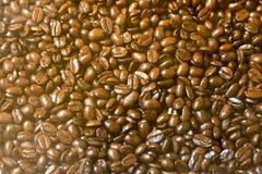 Thailand kaffebönor för kaffevän royaltyfria bilder