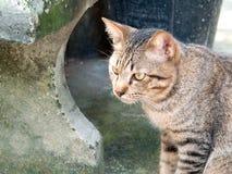 Thailand katt Royaltyfri Bild