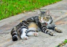 Thailand-Katzenkreuzungen Stockbild