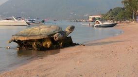Thailand Ko Tao Island stock video