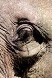 Thailand, Koh Samui: Baby elephant Royalty Free Stock Photography