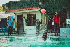 THAILAND-KOH SAMUI Meer-†‹â€ ‹Löweam 8. april 2013 spielen Lizenzfreie Stockfotos