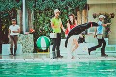 THAILAND-KOH SAMUI Meer-†‹â€ ‹Löweam 8. april 2013 spielen Lizenzfreies Stockbild
