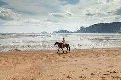 Thailand, Krabi. Beautiful woman on a horse. Paradise tropical beach. Beautiful woman on a horse. Horseback rider Stock Photos