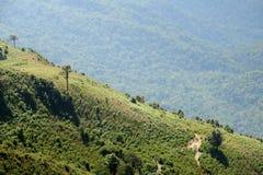 Thailand Landscape : Doi Inthanon nature walking trail, Chiang Mai Royalty Free Stock Photo