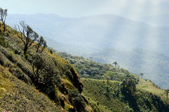 Thailand Landscape : Doi Inthanon nature walking trail, Chiang Mai Royalty Free Stock Images