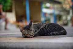 In Thailand, leven vele dakloze katten in tempels Royalty-vrije Stock Foto