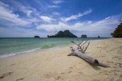 Thailand-Liebling plance lizenzfreies stockbild