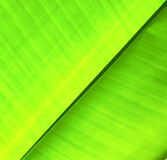 Thailand in the light  abstract leaf and his veins Royalty Free Stock Photography