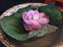 Thailand Lotus ett symbol av buddism Royaltyfri Bild