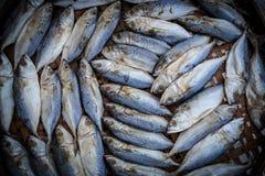 Thailand mackerel Stock Photos