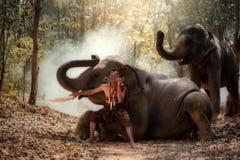 Thailand mannen är en mahout för kontrollelefanter royaltyfri foto
