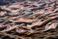 Thailand mat, torkad fisk Arkivbild
