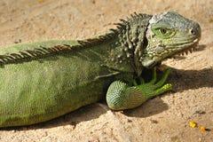 Thailand; mening van een krokodil Stock Fotografie