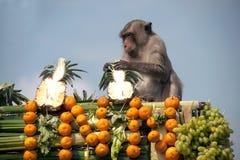 Thailand Monkey Party ( Thailand Monkey Buffet  ) Royalty Free Stock Photo