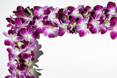 Thailand orchid, close-up Royalty Free Stock Image