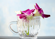 Thailand orchid in glass on blue background. Royalty Free Stock Photography