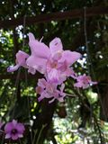 Thailand orchids Stock Photo