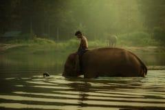 Thailand på elefanten för den Chang bymahouten parkerar för att bada i en pon Arkivfoton