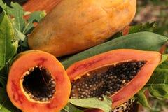 Thailand-Papayafrucht Stockfoto