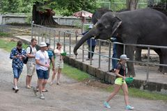Thailand, Pattaya, 26,06,2017 Visitors feed elephants at the zoo Stock Images