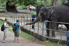 Thailand, Pattaya, 26,06,2017 Visitors feed elephants at the zoo Stock Image